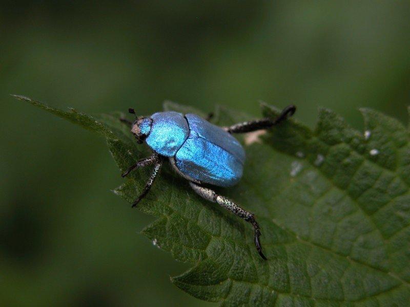 hoplie-bleu-yann-sellier